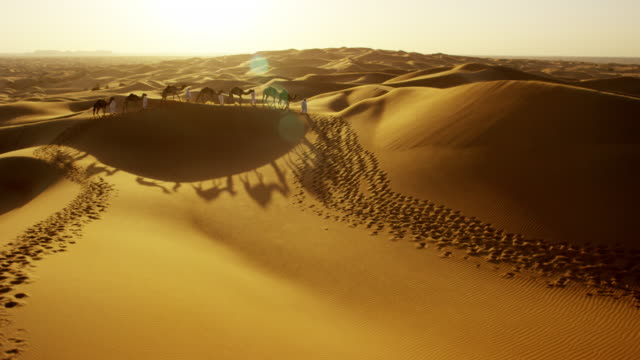 aerial drone of camel train travelling across desert - camel stock videos & royalty-free footage