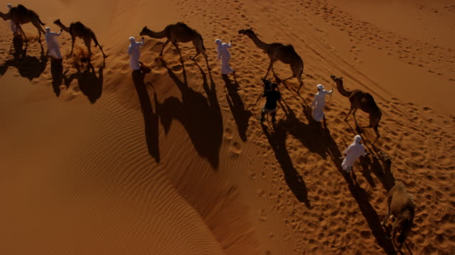 Aerial drone of camel train travelling across desert