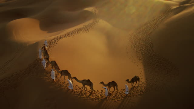 aerial drone of camels being led by handlers - vereinigte arabische emirate stock-videos und b-roll-filmmaterial
