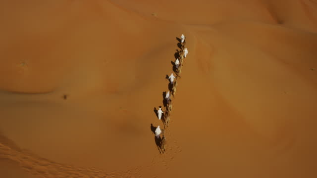 aerial drone of camels being led by handlers - camel stock videos & royalty-free footage