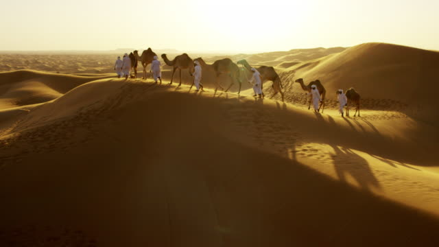 aerial drone of camels being led by handlers - camel train stock videos & royalty-free footage