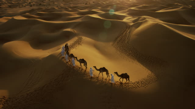 aerial drone of convoy of camels in desert - camel train stock videos & royalty-free footage