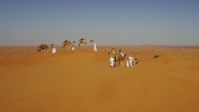 aerial drone of convoy of camels in desert - stamm stock-videos und b-roll-filmmaterial