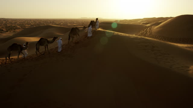 aerial drone of middle eastern male camel owners - stamm stock-videos und b-roll-filmmaterial