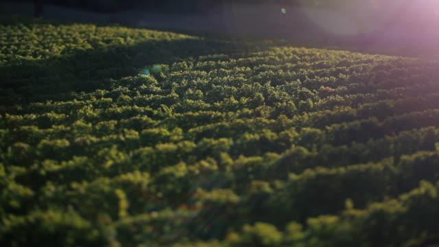 vídeos y material grabado en eventos de stock de aerial drone of winery. - tilt shift