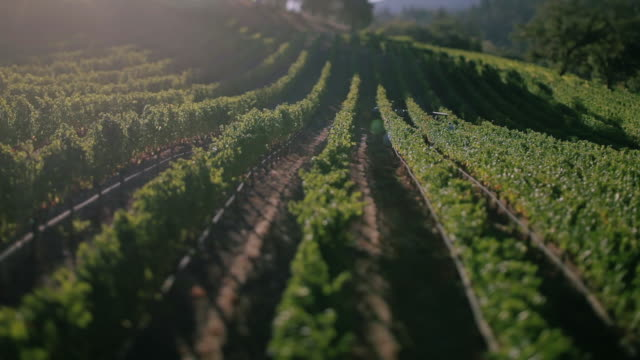 Aerial drone of winery.