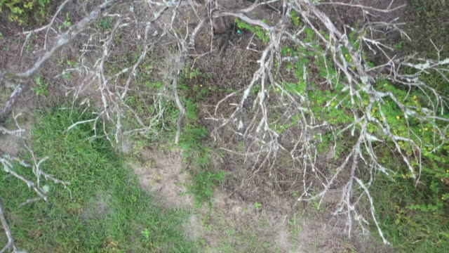 aerial drone over a diseased and dead tree at a citrus farm in florida. - healthcare and medicine or illness or food and drink or fitness or exercise or wellbeing stock videos & royalty-free footage