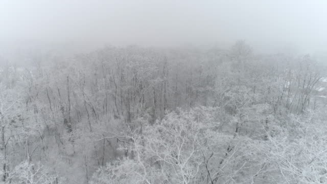 4k aerial drone point of view snow falling over idyllic white treetops in forest, real time - snow storm stock videos and b-roll footage