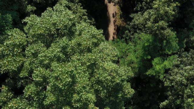 空中ドローンは、道路上のサイクリング2マウンテンバイカーの上に撮影 - サイクリングロード点の映像素材/bロール