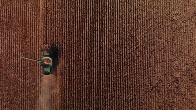 vídeos de stock e filmes b-roll de aerial drone shot directly overhead of a combine harvester with an auger and a grain tank driving through a field of corn at harvest (wide shot) - quinta