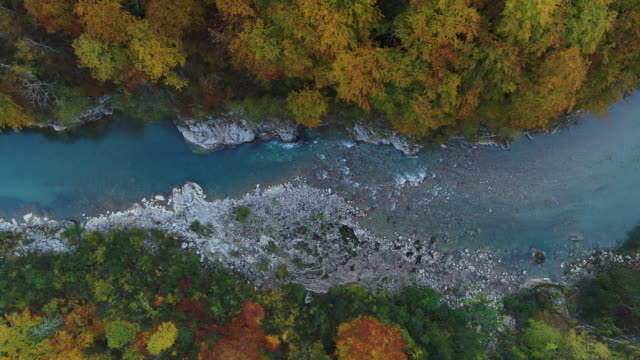 aerial drone shot of a blue river with colorful trees in durmitor national park - durmitor national park stock videos & royalty-free footage