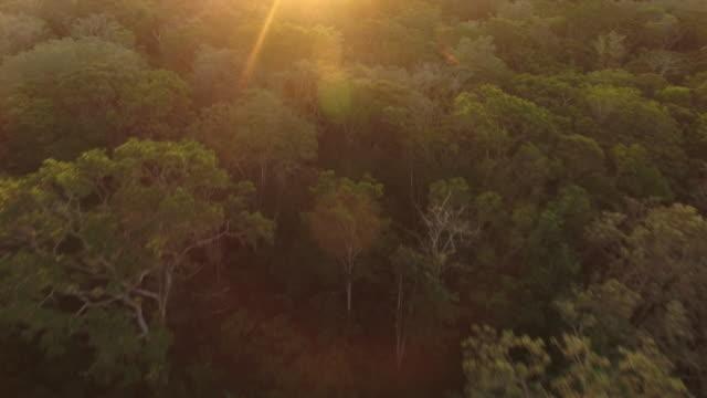 vídeos de stock, filmes e b-roll de drone aéreo disparado de uma floresta brasileira ao pôr do sol - floresta pluvial