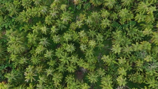 colpo di drone aereo di una foresta colombiana dall'alto - ingrandimento video stock e b–roll