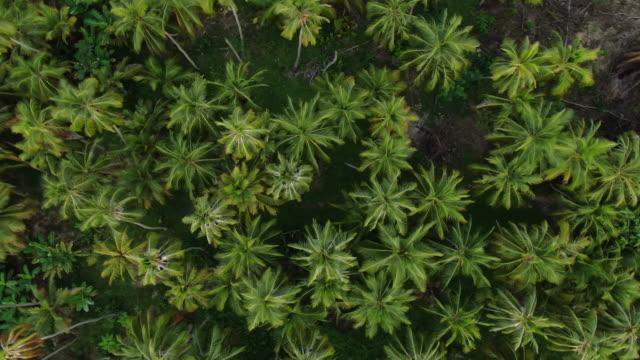 vidéos et rushes de tir aérien de drone d'une forêt colombienne d'en haut - végétation verdoyante