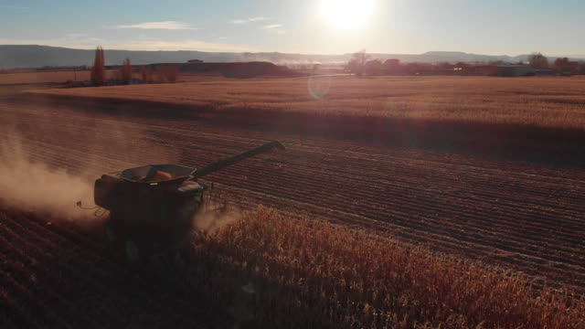 aerial drone shot of a combine harvester with an auger driving through a field of corn at harvest at sunset - tractor stock videos & royalty-free footage