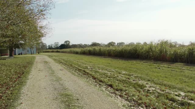aerial drone shot of a country road along a sugar cane field in southern louisiana on a sunny day - south stock videos & royalty-free footage