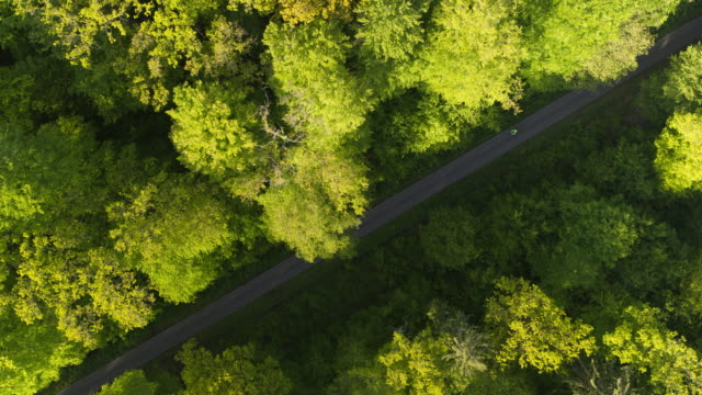 aerial drone shot of a cyclist through the forest in german nature preserve - 1975 stock videos & royalty-free footage