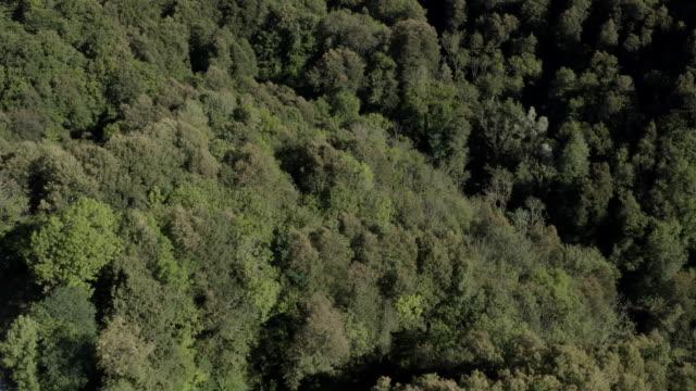 luftdrohne von einem wald von oben mit dichten bäumen - naturwald stock-videos und b-roll-filmmaterial