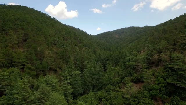 Aerial / Drone shot of a forest in Cyprus