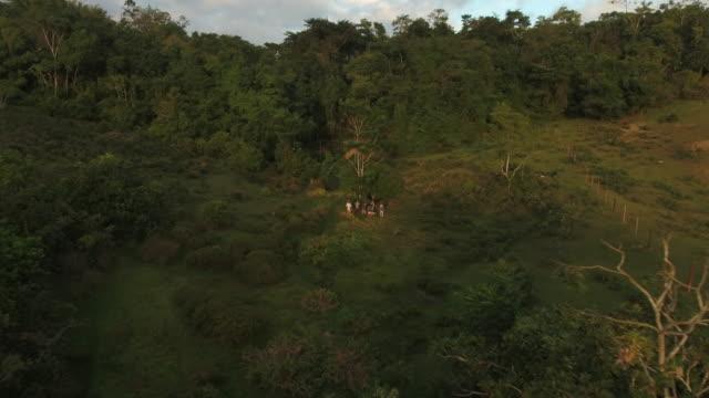 vidéos et rushes de tir aérien de drone d'un groupe de volontaires agricoles dans une clairière au brésil - zoom arrière