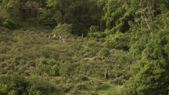 vídeos de stock, filmes e b-roll de drone aéreo é disparado de um grupo de trabalhadores rurais em um campo no brasil - distante