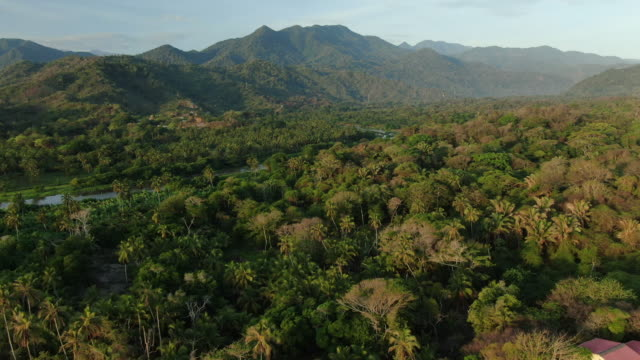 aerial drone shot of a river in a columbian forest - rainforest stock videos & royalty-free footage