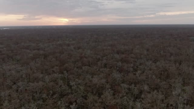 aerial drone shot of a thick forest of cypress trees in swamp wetlands in southern louisiana at sunrise under an overcast sky - overcast stock videos & royalty-free footage