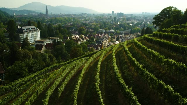 aerial drone shot of a vineyard and old town in freiburg - baden württemberg stock videos & royalty-free footage