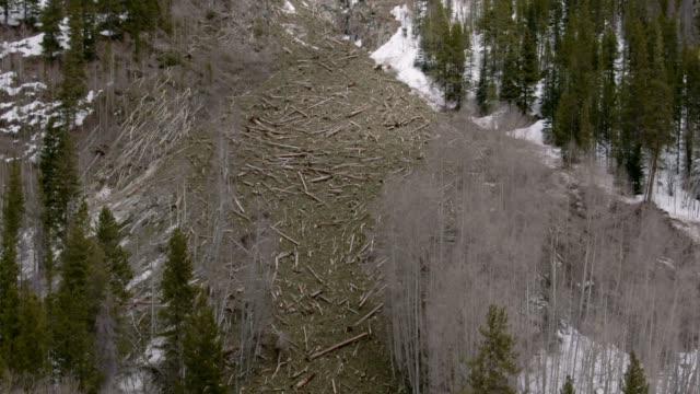 vidéos et rushes de projectile aérien de drone d'un champ de débris d'avalanche avec des bûches d'arbre tombés sur le côté d'une montagne dans l'ouest du colorado - neige fraîche