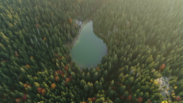 aerial drone shot of pine trees and a lake in durmitor national park - durmitor national park stock videos & royalty-free footage