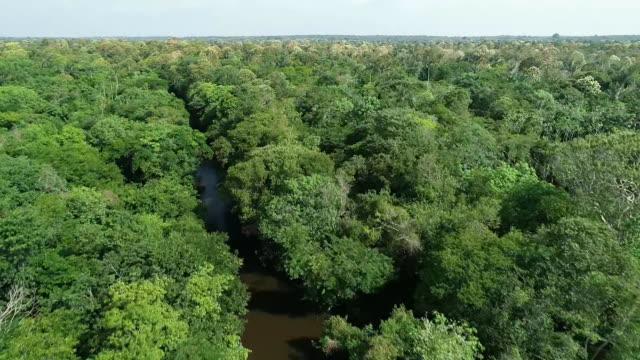 vídeos de stock, filmes e b-roll de aerial drone shot of the negro river in brazil - aerial or drone pov or scenics or nature or cityscape