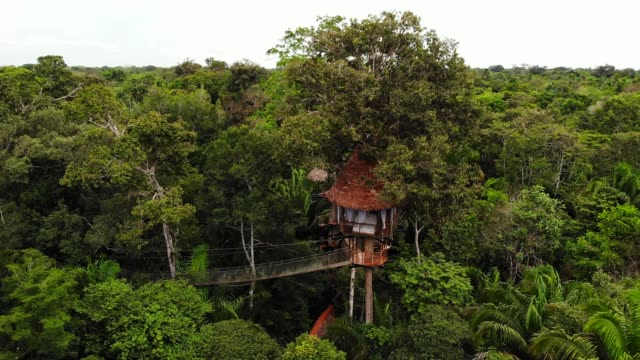 aerial drone shot of the treehouses at the treehouse lodge, iquitos, amazon, peru, south america - 40 seconds or greater stock videos & royalty-free footage