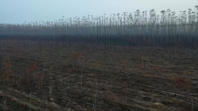 vídeos de stock, filmes e b-roll de aerial drone shot of trees burned in the aftermath of a forest fire in rondonia brazil - aerial or drone pov or scenics or nature or cityscape