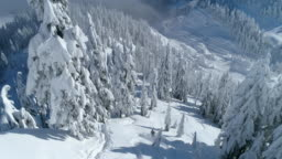 Aerial Drone Shot One Person Skiing Down Mountain Forest in Washington State Stevens Pass Cascades