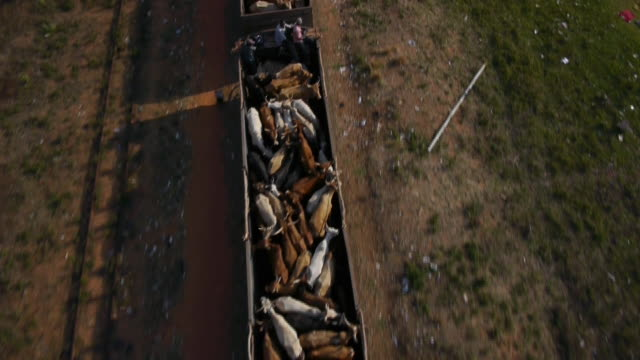 Aerial drone shot over a freight train carrying cattle.