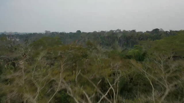 vídeos de stock, filmes e b-roll de aerial drone shot over the madeira river and surrounding rainforests in rondonia brazil - aerial or drone pov or scenics or nature or cityscape