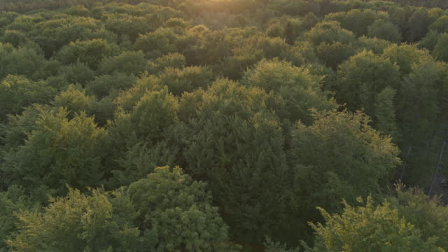aerial drone shot over the tops of trees at sunset in german nature preserve - 1944 stock videos & royalty-free footage