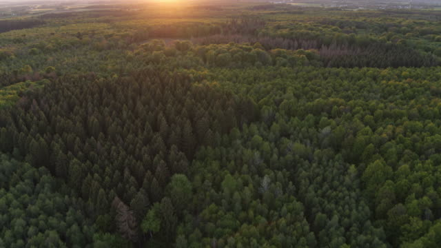 aerial drone shot over the tops of trees at sunset in german nature preserve - 1956 stock videos & royalty-free footage