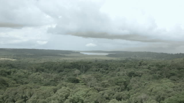 aerial drone shot over the verdant forests on bugala island. - ウガンダ点の映像素材/bロール