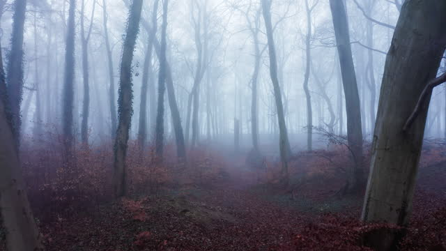 aerial drone video of autumn trees in thick fog weather conditions, mysterious woodlands forest in mist and fog, beautiful nature landscape scenery in england, uk - mystery stock videos & royalty-free footage