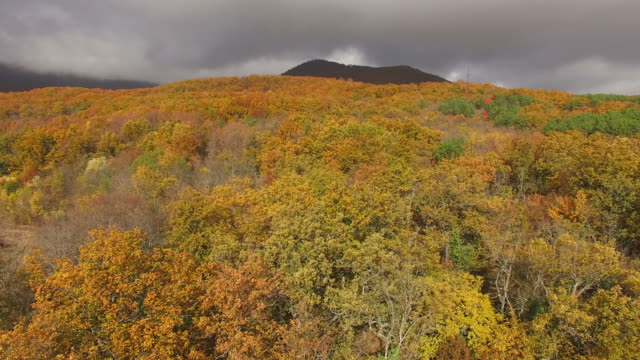 Aerial drone video of fall foliage
