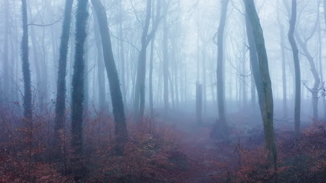 aerial drone video of haunted halloween woods scene in misty foggy weather conditions with trees in mysterious blue woodlands in mist and fog, mysterious nature landscape scenery in england, uk - mystery stock videos & royalty-free footage