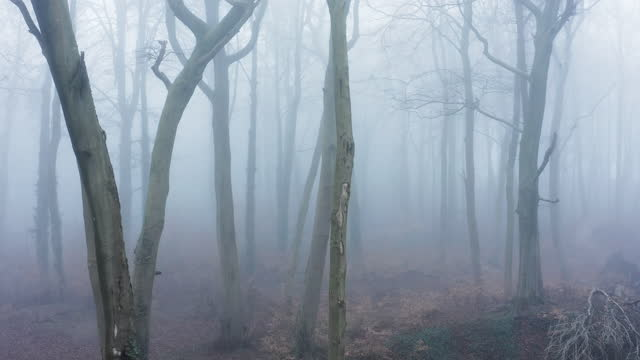 aerial drone video of haunted mysterious woods with spooky trees in thick mist and fog, woodlands forest in misty foggy weather, beautiful nature landscape scenery in england, uk - bare tree stock videos & royalty-free footage