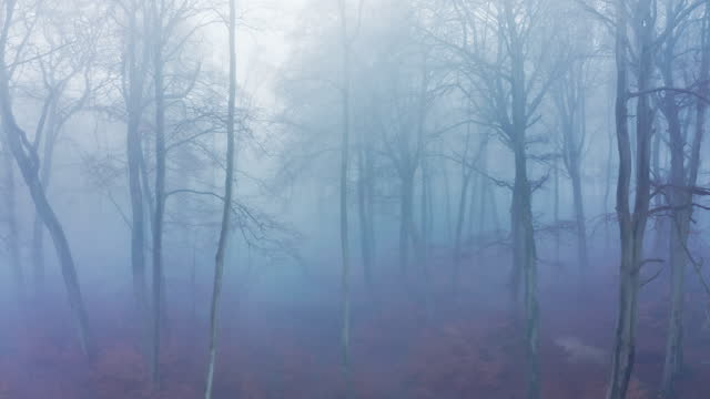 aerial drone video of woods in misty foggy weather conditions with autumn trees in mysterious woodlands in mist and fog, spooky haunted atmospheric mood, beautiful nature landscape scenery in england, uk - bare tree stock videos & royalty-free footage
