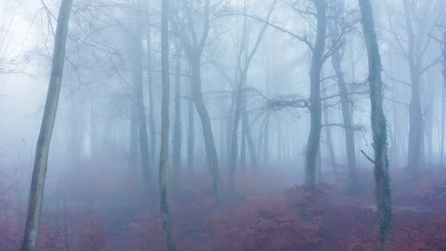 aerial drone video of woods in misty foggy weather conditions with bare trees in mysterious woodlands in mist and fog, spooky haunted atmospheric mood, beautiful nature landscape scenery in england, uk - bare tree stock videos & royalty-free footage