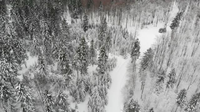 Aerial drone view a snow covered forest and winter road trail.