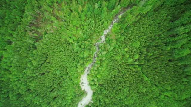 aerial drone view from above of  dried up river cutting through green forest - zoom out stock videos & royalty-free footage