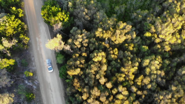 aerial drone view of a car vehicle driving on a dirt road through a forest with surfboards on top. - slow motion - new south wales stock videos & royalty-free footage