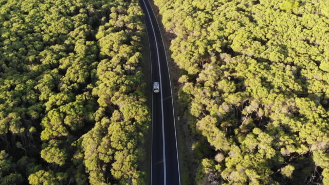 stockvideo's en b-roll-footage met aerial drone view of a car vehicle driving on a road through a forest with surfboards on top. - slow motion - onbemand luchtvaartuig