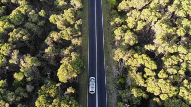 aerial drone view of a car vehicle driving on a road through a forest with surfboards on top. - slow motion - new south wales stock videos & royalty-free footage
